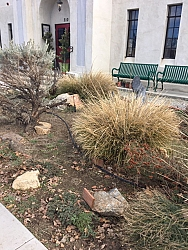 On January 20 Georgette Theotig and Rich Erdman spent several hours getting the Museum's Native Plant Garden ready for Spring.