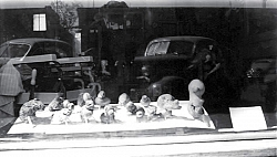 Jumbo potatoes in the window of Joe Sola's barber shop on Green Street.